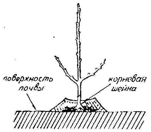 Сажать дерево во сне для женщины 12